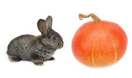 kanin och pumpa som isoleras på vit bakgrund arkivbilder