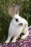 Kanin på en filt Fotografering för Bildbyråer