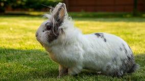 Kanin på en grön gräsmatta i trädgården royaltyfri fotografi