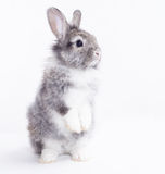 Kanin på en vitbakgrund. royaltyfria bilder