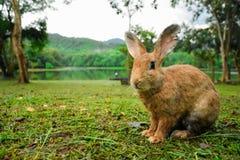 Kanin på gräs arkivfoto