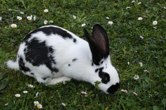 Kanin på gräs Arkivbild