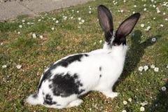 Kanin på gräs Arkivbilder