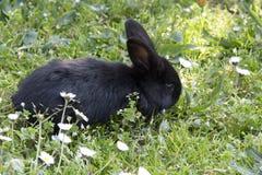 Kanin på gräs Royaltyfri Bild