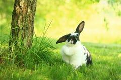 Kanin på gräset Arkivfoton