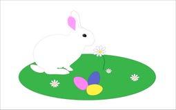 Kanin på gräset Arkivbild