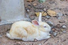 kanin på stenen i Thailand Royaltyfri Foto