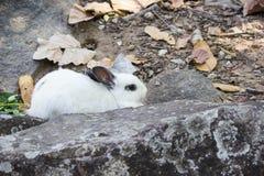 kanin på stenen i Thailand Arkivbilder