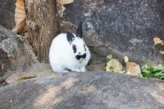 kanin på stenen i Thailand Royaltyfri Fotografi