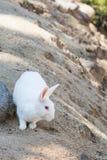 kanin på stenen i Thailand Royaltyfri Bild