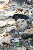 kanin på stenen i Thailand Royaltyfria Bilder