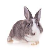 Kanin på vit bakgrund arkivfoton