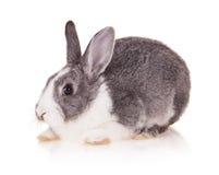 Kanin på vit bakgrund arkivfoto