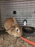 Kanin som är till salu på det välkända mellanvästern- matningslagret arkivbilder