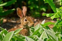 Kanin som äter i trädgården arkivbilder