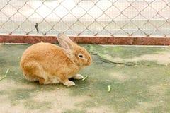 Kanin som äter kaninmat Fotografering för Bildbyråer