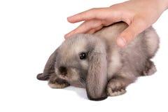 Kanin som isoleras på en vitbakgrund Royaltyfria Bilder
