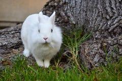 Kanin som spelar i gräset arkivfoto