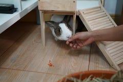 Kanin som trycker på handen arkivfoto