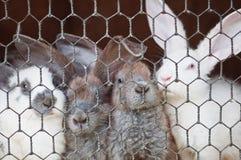 Kaninchen Stockfoto