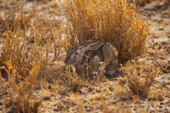 Kaninchen Stockfotos