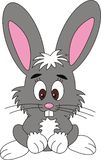 Kaninchen, Lizenzfreie Stockfotos