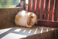 Kaninchen Stockbild