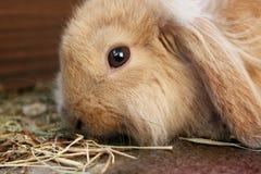 Kaninchen Stockfotografie