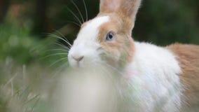Kaninchen stock footage