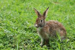 Kaninchen auf dem Gras Stockfotos