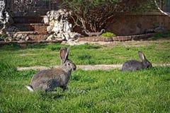 Kaninchen auf dem Gras Stockbild