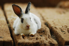 Kaninchen auf dem hölzernen stockfotografie