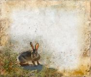 Kaninchen auf einem Grunge Hintergrund Lizenzfreie Stockbilder