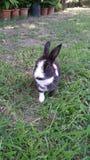 Kaninchen auf Garten lizenzfreies stockbild
