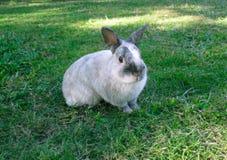 Kaninchen auf Gras lizenzfreie stockfotografie
