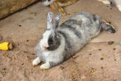 Kaninchen cuties Lizenzfreie Stockfotos
