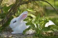 Kaninchen, das aus den Grund liegt lizenzfreie stockbilder