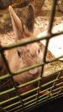 Kaninchen, das in einem Käfig und Blicke verärgert und hungrige Augen sitzt lizenzfreie stockbilder