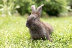 Kaninchen, das tagsüber auf dem Gras sitzt Haupthasen, die an sitzen stockbilder
