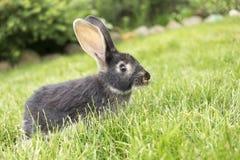 Kaninchen, das tagsüber auf dem Gras sitzt Haupthasen, die an sitzen lizenzfreie stockbilder