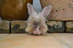 Kaninchen, das versucht, sich zwischen Ziegelsteinen und Blumentöpfen zu verstecken Lizenzfreie Stockbilder