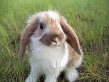 Kaninchen dekorativ stockbild