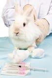 Kaninchen an der Doktorbehandlung Lizenzfreie Stockfotos