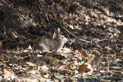 Kaninchen in der Natur lizenzfreie stockfotos