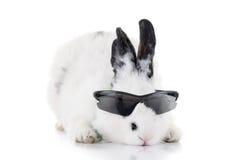 Kaninchen in der Sonnenbrille lokalisiert Stockfotografie