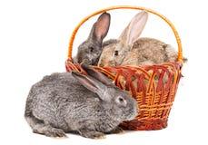 Kaninchen, die in einem Korb sitzen Stockbild