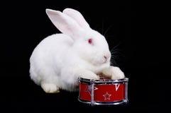 Kaninchen die weißen flaumigen Spiele auf einer Trommel Stockfoto