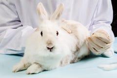Kaninchen am Doktor Stockfotos