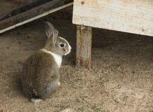 Kaninchen in einem Bauernhof Stockbilder