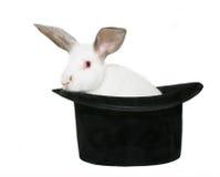 Kaninchen in einem Hut stockbilder